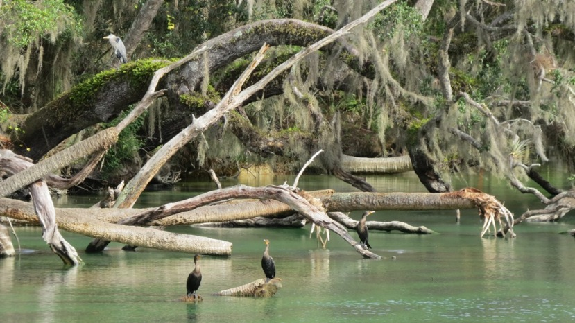 blue state park manatees  by anchor it down